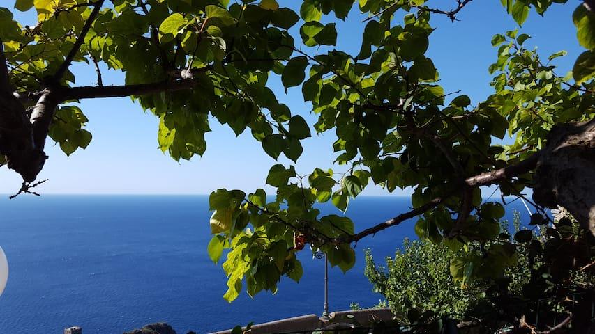 Monolocale con giardino vista mare