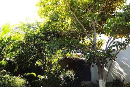2 BEAUTIFUL Rooms w/TROPICAL GARDEN - San José - Szoba reggelivel