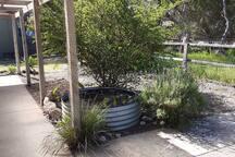Outdoor verandah with herb garden establishing