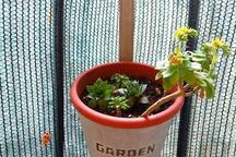 Balcony garden :)