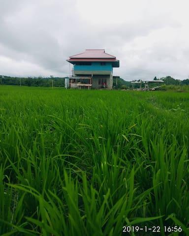 Banua Lida, homey paddy field surrounded lodge.