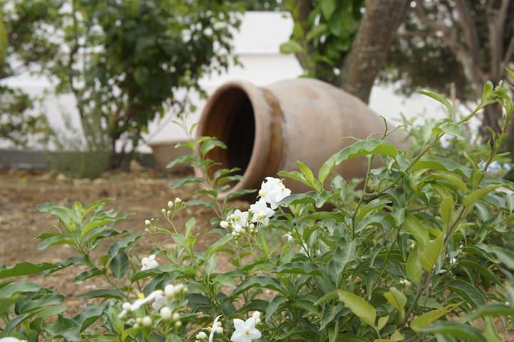 MySicily Home casa con giardino