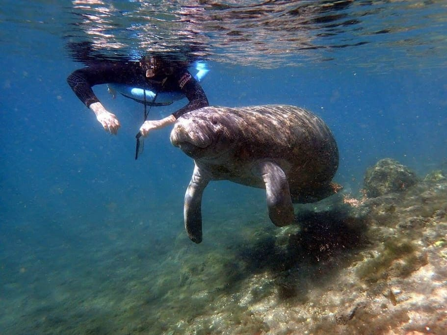 The Magnolia House Guest's Stephanie and Matt's experience of Swimming with the Manatee