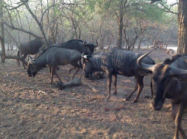Zinkwazibush (4 star) - Marloth Park