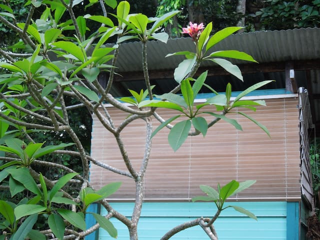 Hana Organic Farm Cabins and Camping-Hale Maluhia