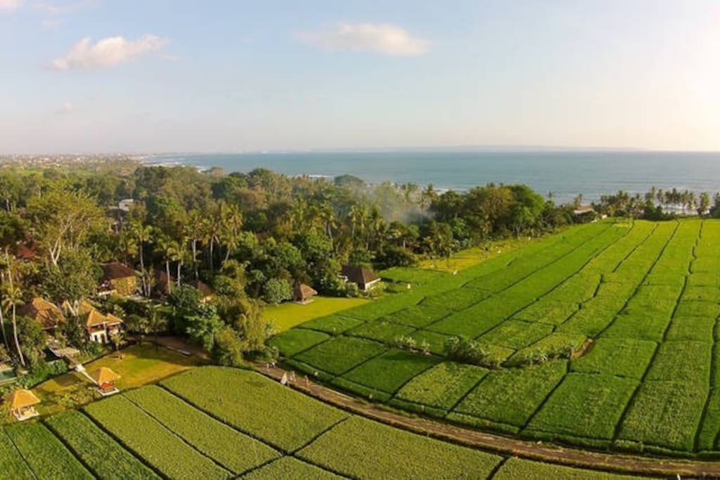 Surrounded by ricefields, and just 200m from a pristine beach