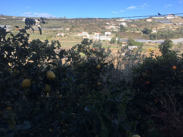 Imperia | Dolcedo   Surrounded by the Olive Trees