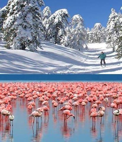 Ski in Troodos - 1 hour away