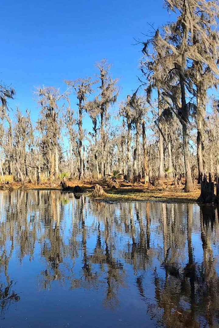 Even in winter the swamp is beautiful!