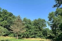 Backyard.  Many mature trees.