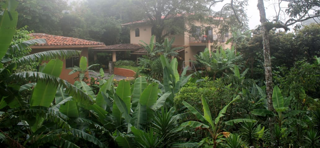 The Hacienda Bed and Breakfast is located in a banana forest