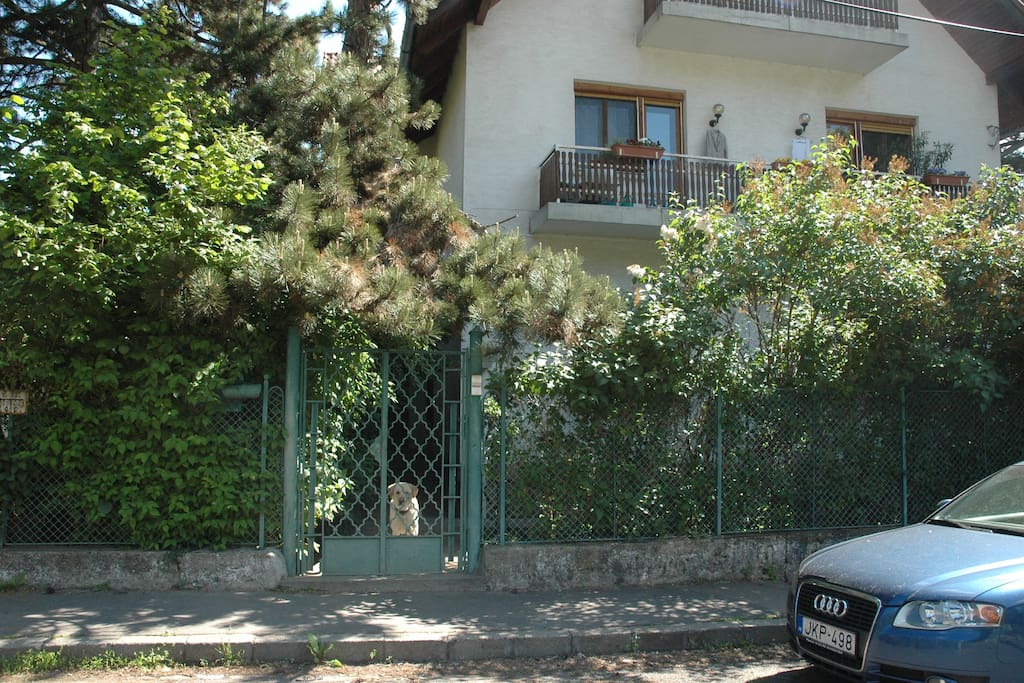 the house with green gate and Drazsi our friendly and kind dog:)