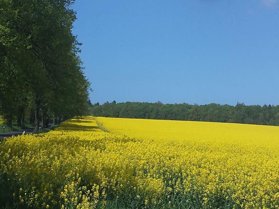 Frühling auf der Insel Rügen