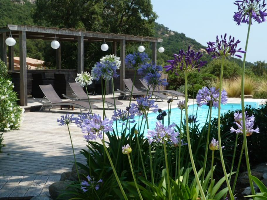 Pool is set in a mature provencal garden with decking and a wonderful pavillion
