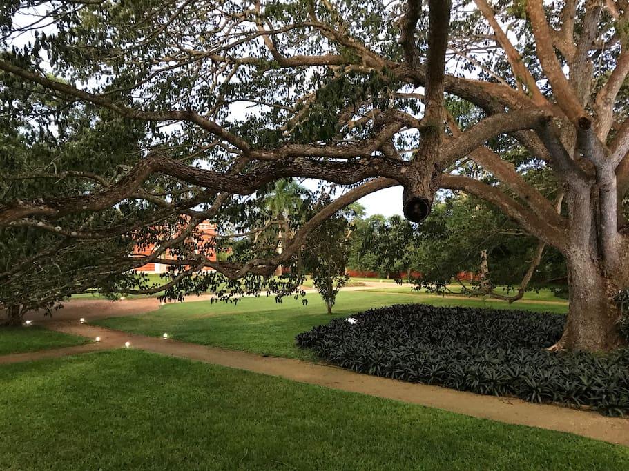 Hacienda's gardens