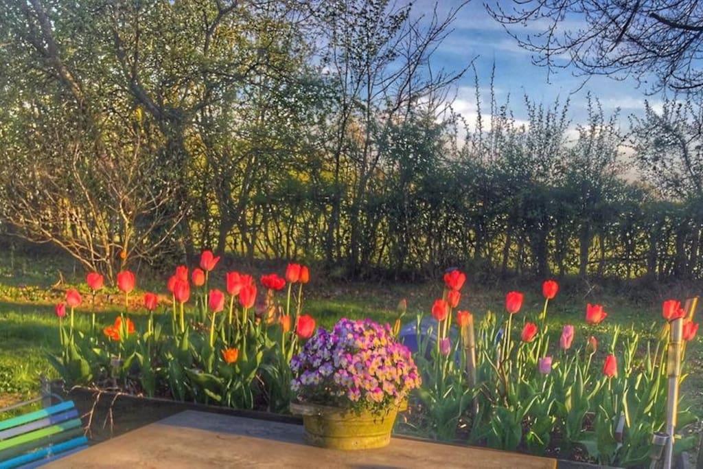 Terrace in spring