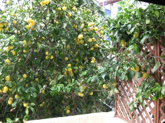 Lemon Tree House - Αγία Πελαγία - Dům