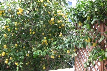 Lemon Tree House - Αγία Πελαγία