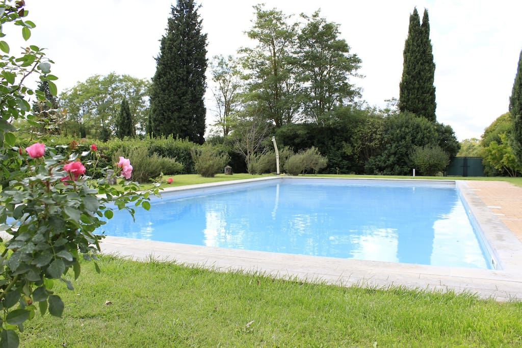 swimming pool, garden