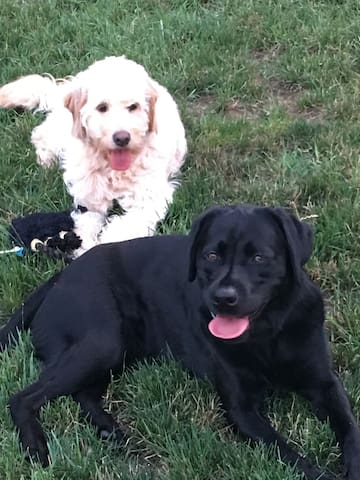 Oswald and Lucy family dogs - they will bark whenever someone comes home, but they will settle down quickly. You have to like dogs to stay with us.!!! We do keep the dogs separated from the guest room, but they are in the kitchen and outside.