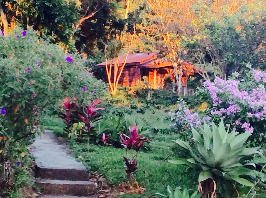 The cabaña in the middle of our tropical gardens