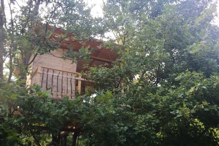 Treehouse near Rome and Neaples