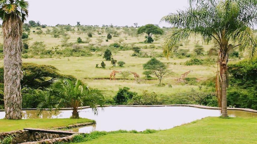 Nairobi National Park - Kampi ya Karin