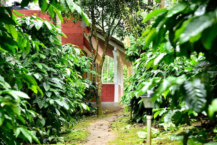 Chikmagalur Cottages-5L