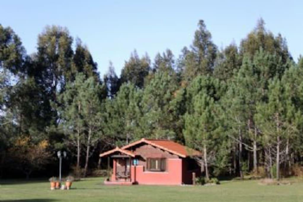 Vista Cabaña y entorno
