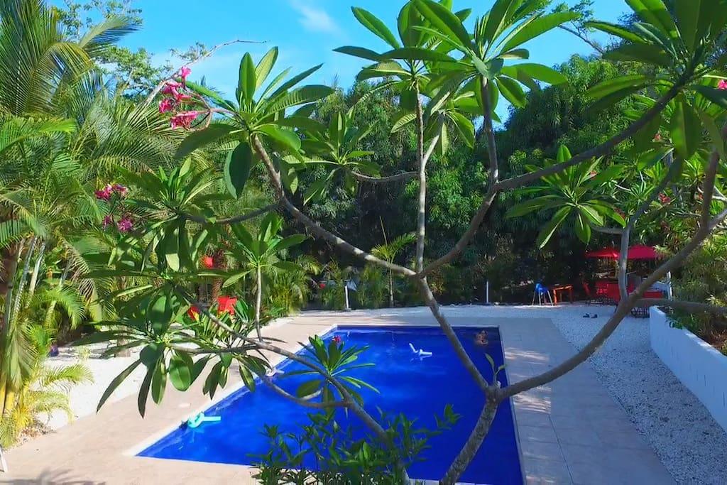 Blanconejo pool