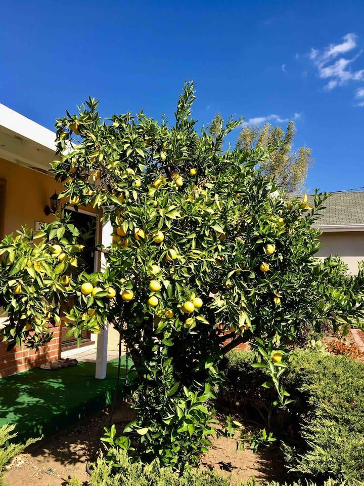 Fresh organic Oranges? :-)