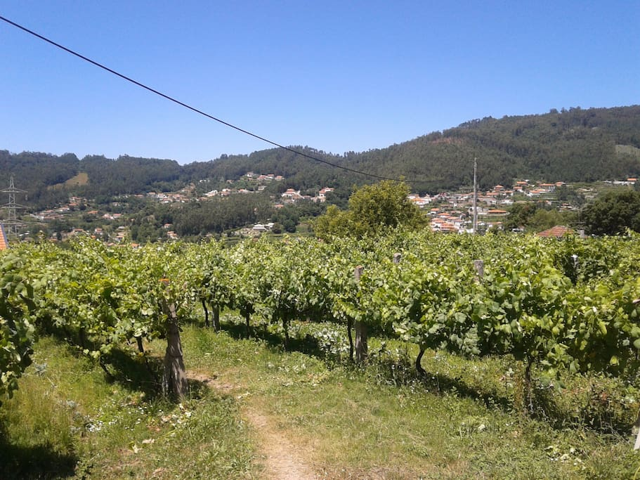 Vista da Vinha