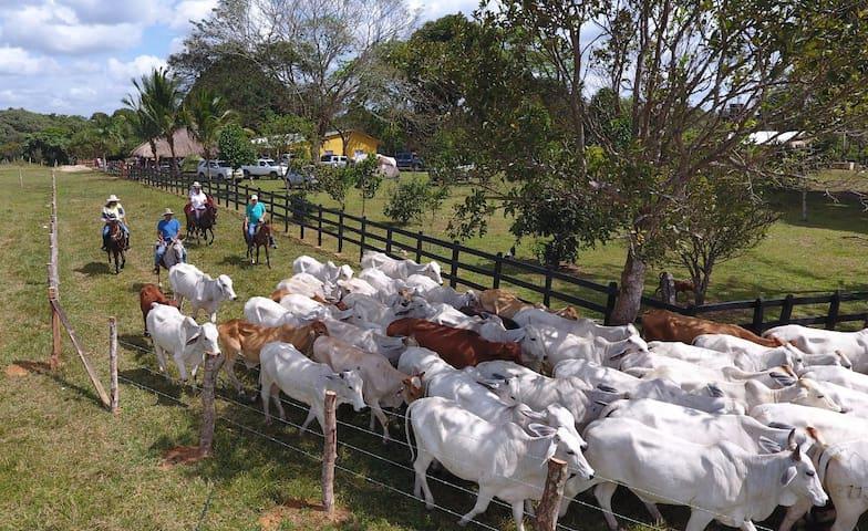 Los visitantes pueden disfrutar del trabajo de llano, ordeño y montar a caballo (Opcional).