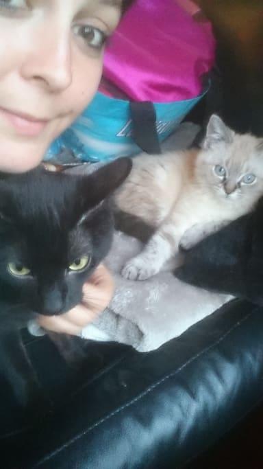 Les chats dont il faut s'occuper.