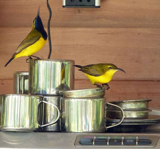 sun birds may join you for morning coffee