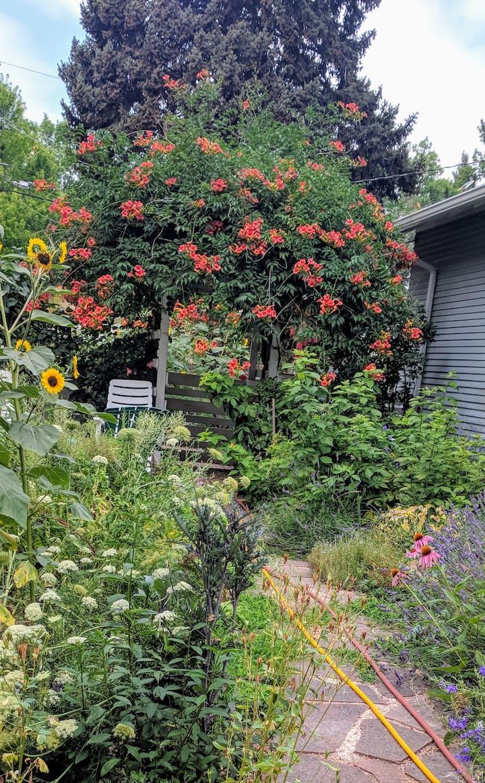 Nikki's Garden in Old Town Westside Neighborhood