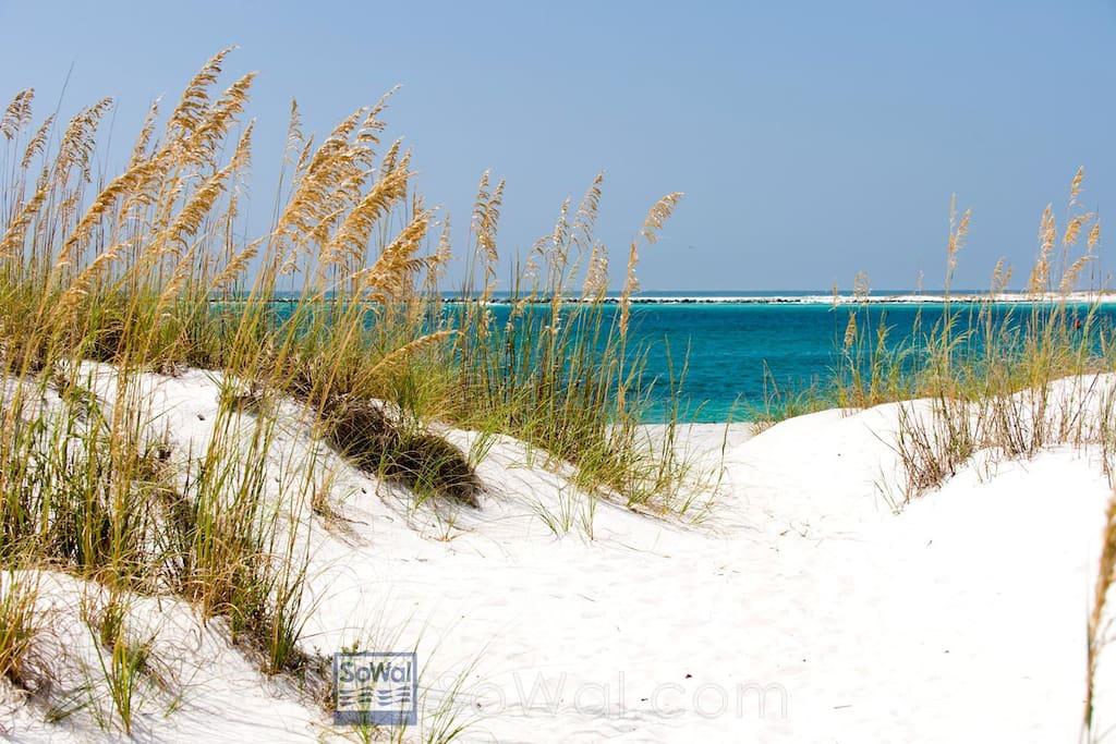 majestic dunes