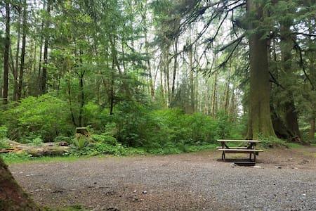 Campsite #15 · Forest Campsite