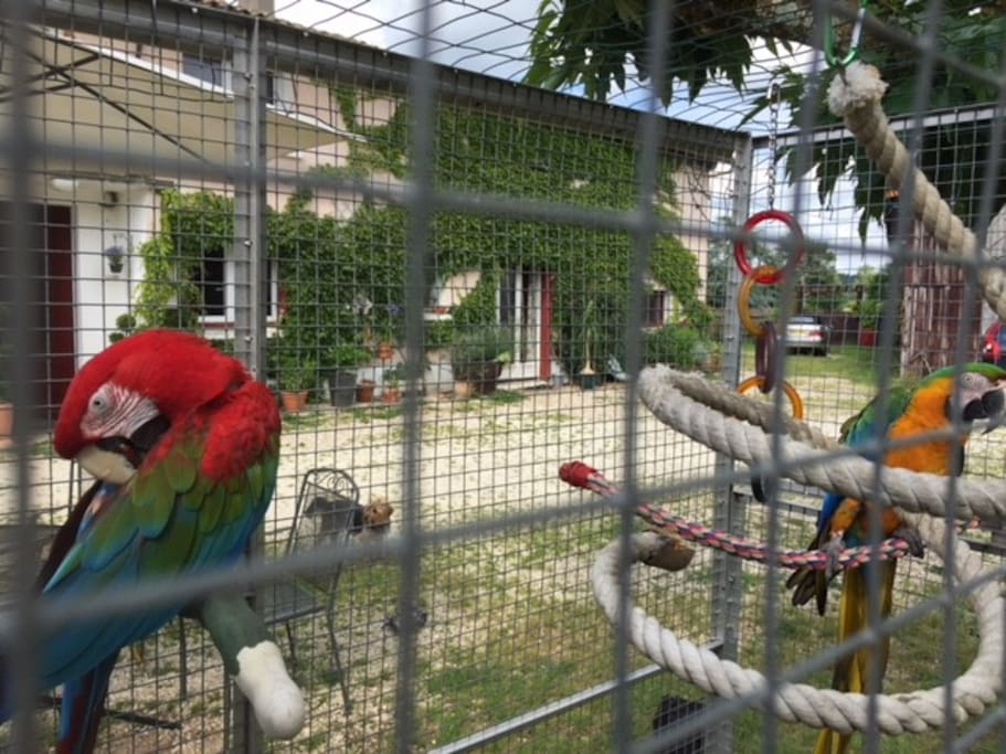 The Macaws will welcome you