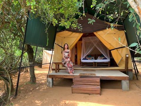 Rustic Luxurious Tented  Beachside Camping in Yala