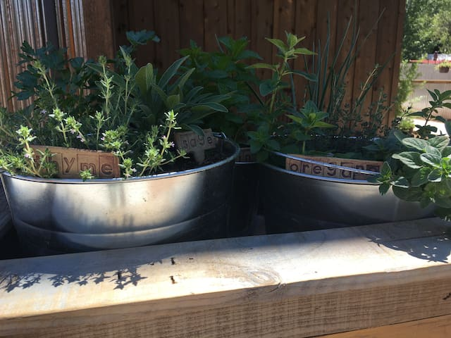 Our little BBQ area herb garden.