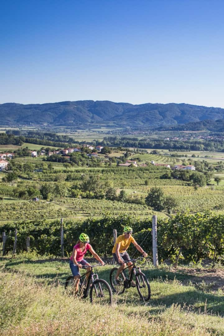 Cycling through vineyards.