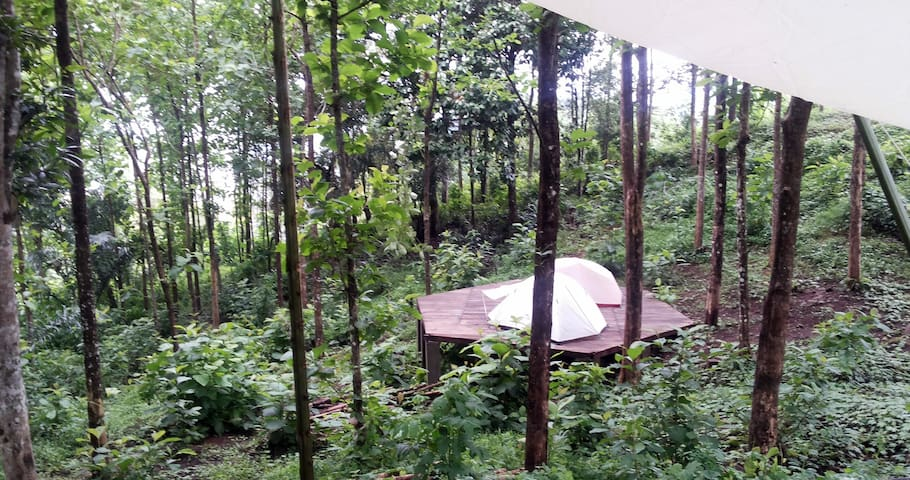 Schitzo Hills Cozy Forest Tent. Pool w/ Bay View.
