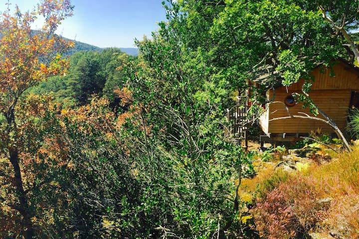 Cabane famille Des Chesnaies-Hêtre sous le Charme