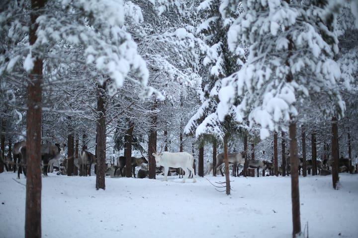 Idyllic Retreat in Swedish Lapland