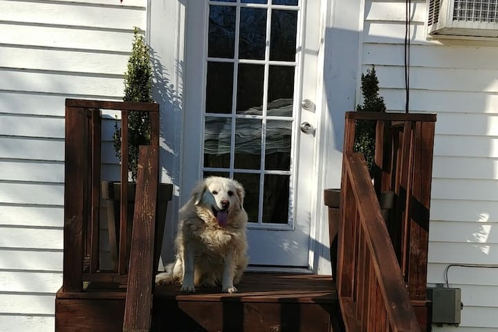 """You may be greeted by resident farm dog, """"Tuffy""""!"""