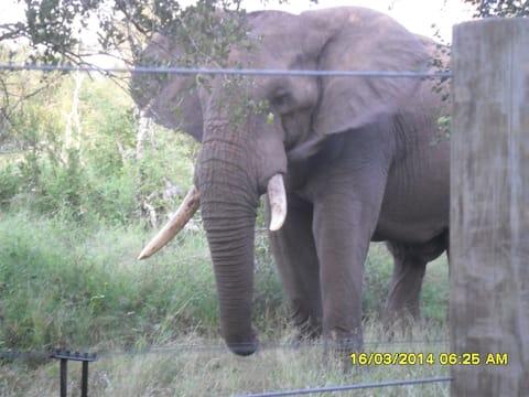 Elephants' Cottage - 102 Mjejane Game Reserve, KNP