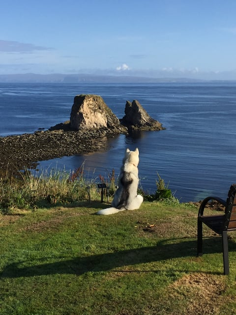 Windhaven Cafe, Camping and B&B (D)