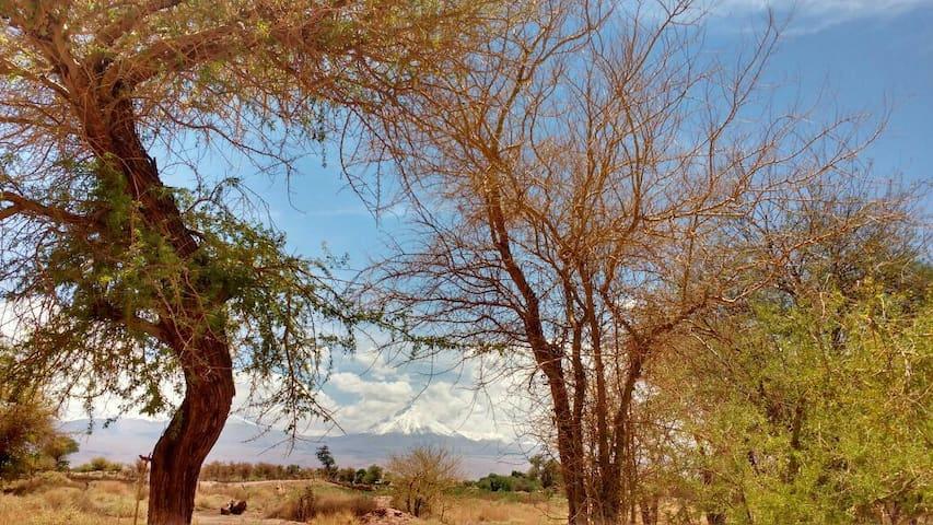 Alojamiento en Solor, hermosa vista - San Pedro De Atacama - Dom