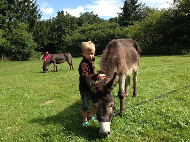 Kids love the donkeys, so memories are made